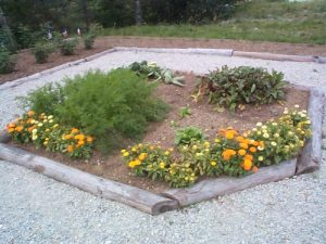 One of the garden beds